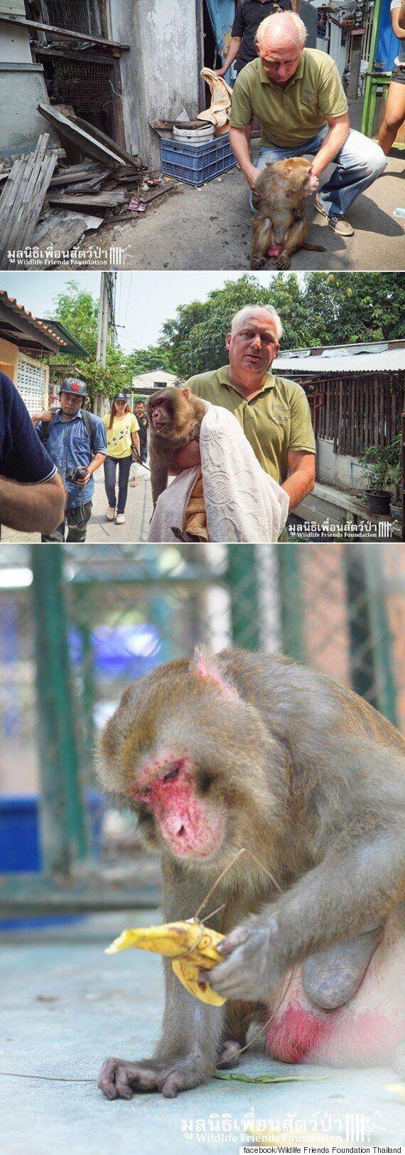 25년 동안 건물 사이 틈에 갇혀 살던 원숭이가