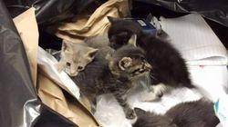 쓰레기 봉투 속에서 발견된 4마리의 새끼