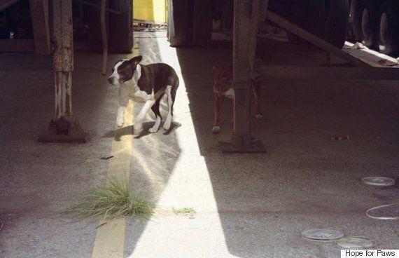 구조마저 두려워하던 개들이 함께 구출됐다(사진,