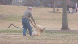 공원에서 더 놀고 싶었던 개는 이렇게