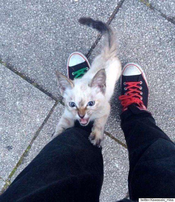 동네에서 갑자기 나타난 새끼 고양이의 선택을