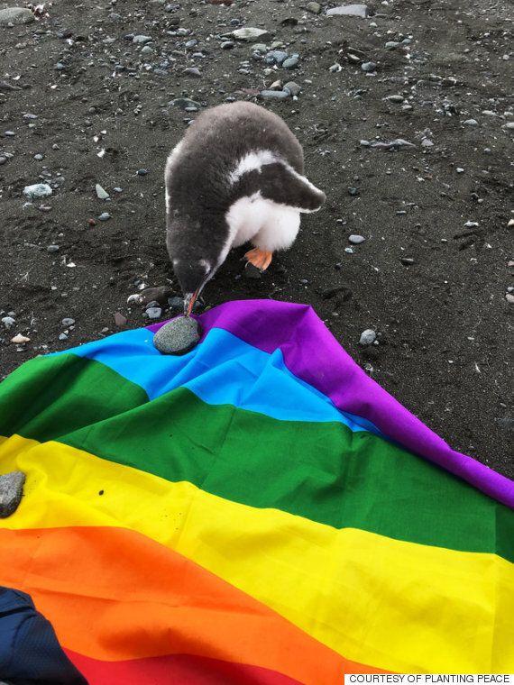남극이 첫 번째 'LGBT 우호 대륙'으로