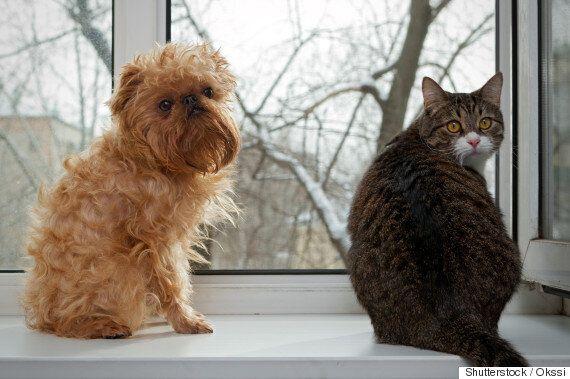 고양이 애호가 vs 개 애호가: 사이좋게 지낼 수