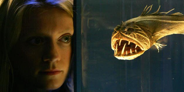 London, UNITED KINGDOM: A visitor to the Science Museum in London, studies a Fangtooth fish, 13 October,...