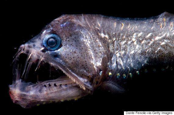 육지에 살지 않는 게 다행인 무시무시한 해양생물