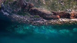 이 아름다운 바다 동영상은 사실 끔찍한 비극의
