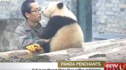 이 팬더는 뽀뽀와 셀카를 좋아한다