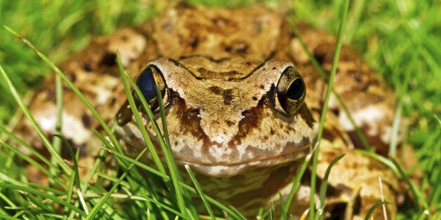 강남구가 '두꺼비 로드킬'을 막기 위해 마련한