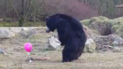 곰 세 마리가 핑크색 풍선에