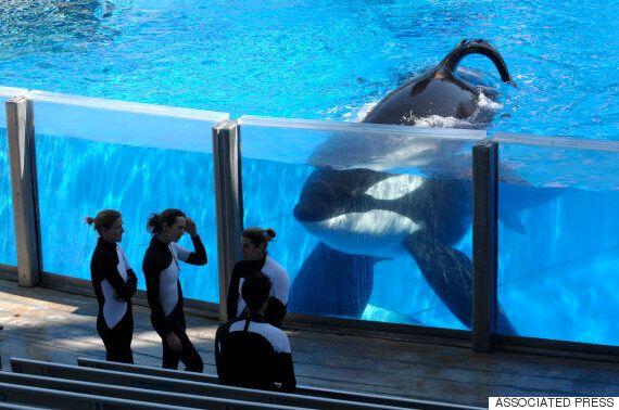 씨월드가 마침내 범고래 사육을