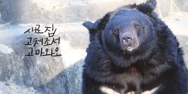 서울대공원 곰, 앞으로 '이런 곳'에서 생활하게 된다(전후