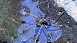 호주에서 파도타기의 대가인 신종 거미가