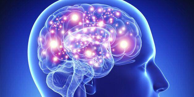 알파고와 오르가슴 | 베르나르 베르베르의 '뇌'를