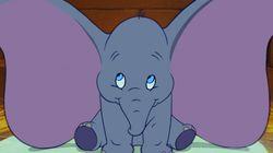 코끼리 '덤보'의 실화는 영화와
