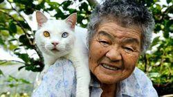 미사오 할머니의 고양이 후쿠마루가 무지개 다리를