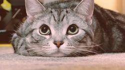 길고양이를 위한 닛산의 캠페인은