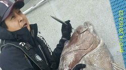 완도 해역에서 잡힌 초대형 돗돔의 놀라운