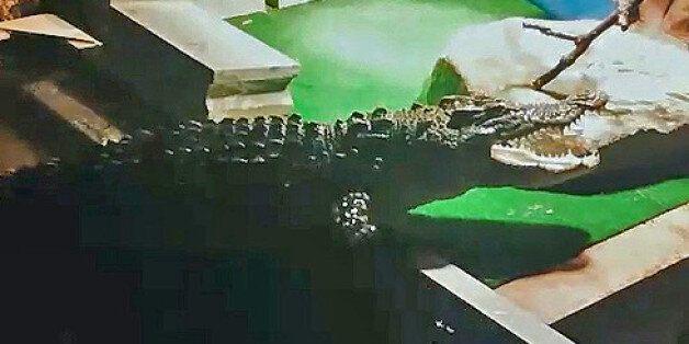 투룸에 숨겨놓은 1m 악어를 경찰이