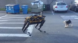 로봇 개가 진짜 개를