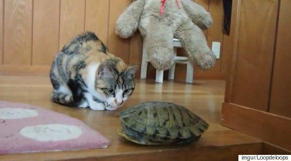 문 닫고 들어간 거북이를 본 고양이의