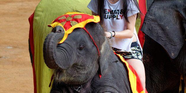 세계에서 가장 잔인한 야생동물 관광상품