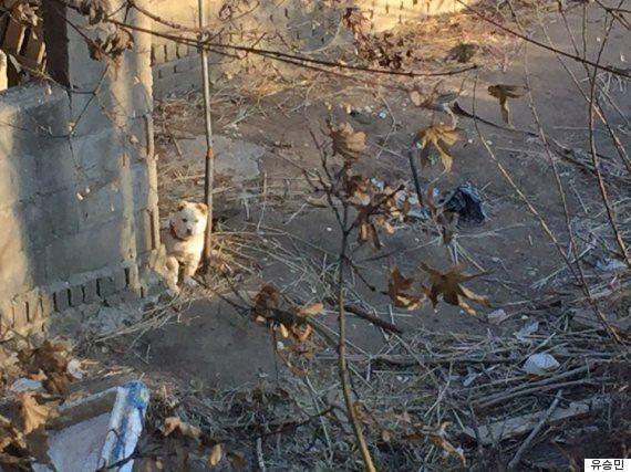 이 사진에서 강아지를 찾아보세요(확대사진