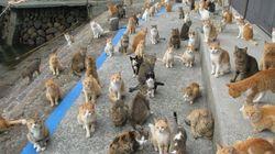 일본의 고양이섬이 '사료'를 보내달라는 트윗을
