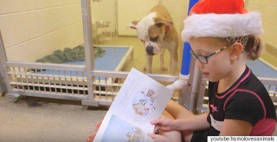 이 보호소에서는 아이들이 유기견들에게 책을