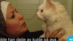 그리스에서 길을 잃은 고양이가 노르웨이에서 가족을 만난