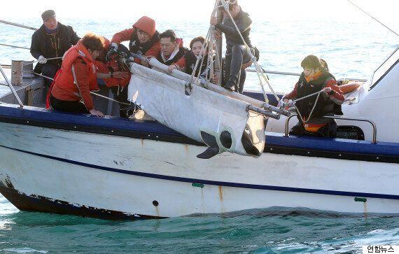 울산에서 구조된 큰돌고래가 26일만에 바다로