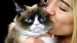 당신의 고양이가 아프다는 25가지