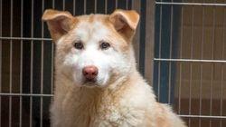 미국 동물보호단체, 한국 식용견 농장서 개 30마리