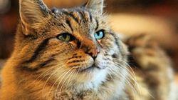 세계에서 나이가 가장 많은 고양이의