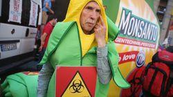 소두증이 GMO기업 몬산토 때문이라는 '음모론'의