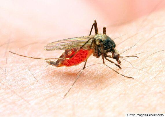 '소두증은 지카 바이러스가 아니라 몬산토 때문'이라는 음모론에는 근거가