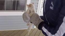 추위에 얼어붙은 길고양이를 살려낸