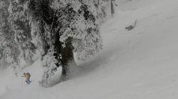 스키를 타다가 스노우 레오파드를