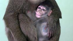 중국 과학자들이 '자폐증' 원숭이를