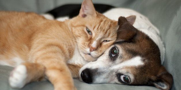 Cute dog with cat. Love. red and cute
