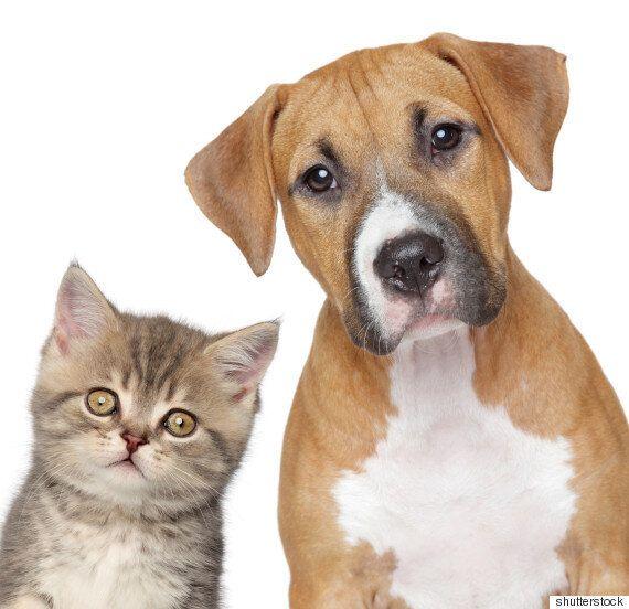 개와 고양이 중 어떤 동물이 반려인을 더