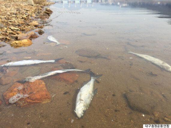 한겨울에 낙동강 물고기가 떼죽음을 당한 이유(사진