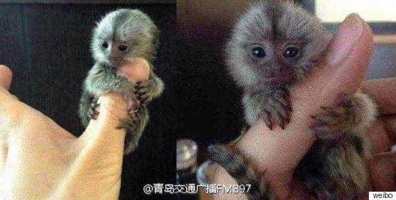 중국 부자들은 새해 선물로 이 동물을 주고