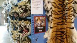 죽어서 돈을 남기는 호랑이 | 중국 호랑이 공원의