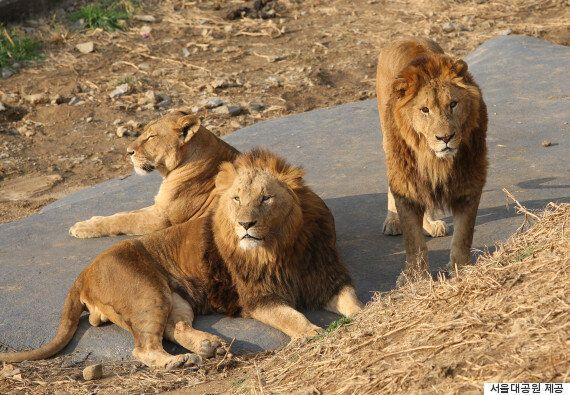 서울대공원의 동물 39마리, 두바이로
