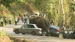 실연한 코끼리는 자동차에 화풀이를