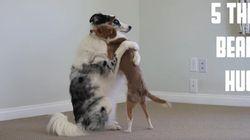 4마리의 개가 알려주는 포옹의 방법