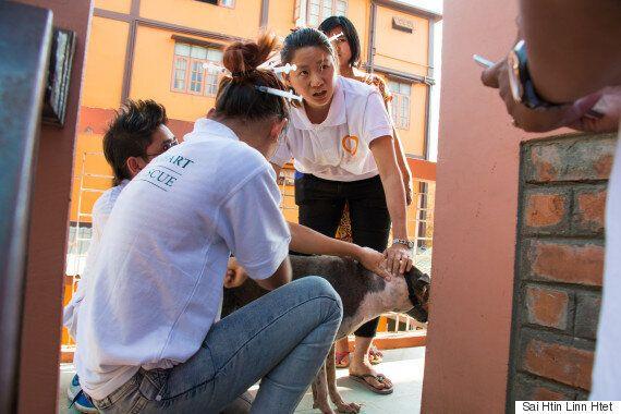 미얀마에는 유기견을 독살하는 도시가 있다(사진,