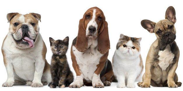 강아지, 고양이에게 서열은