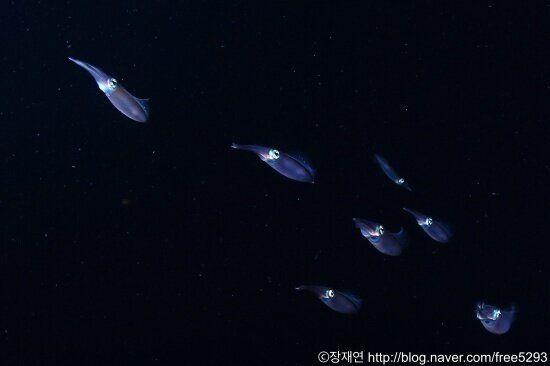 [바다생물 이야기] 우리는 납작하지 않아요,