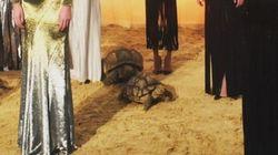 뉴욕 패션 위크 쇼에서 짝짓기를 한 거북이들(사진,